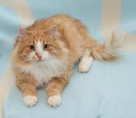 Очаровательный ласковый молодой котик Рафаэль