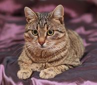 Уютный котик Теодоро ищет дом