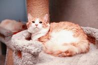 Фото: Ориентальная короткошёрстная : Котик Алисий очень ждёт маму и папу!