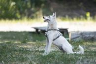 Фото: Ориентальная короткошёрстная : Отдам в хорошие руки молодую небольшую собачку Ясю