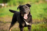 Фото: Ориентальная короткошёрстная : щенок Сальвадор в добрые руки