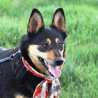 Макбет – молодая жизнерадостная собачка ищет заботливую семью.