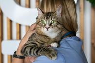 Котик Мартин в добрые руки