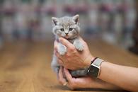 Отдам в хорошие руки котенка девочку Челс