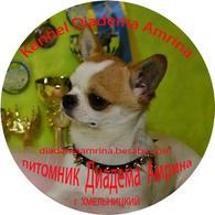 Гладкошерстный чихуахуа (вязка)+алиментные щенки .