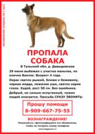 Пропала собака! Прошу помощи.