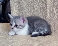 Продам котят. фото