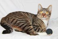 Кот Степан ищет свое кошачье счастье!