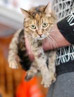 Кошка с потрясающим трогательным взглядом ищет дом.