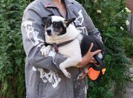 Маленькая собачка Мила в поисках любящей семьи!