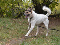 Молодой, крупный, воспитанный пес Тарзан в добрые руки