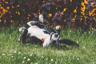 Фото: Ориентальная короткошёрстная : Одинокий приютский пес Пушок хочет найти хозяев!