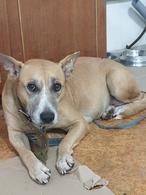 Осиротевшие собаки ищут новый дом и семью!