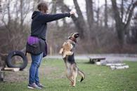 Фото: Ориентальная короткошёрстная : Отдам в хорошие руки молодую собаку Замиру.