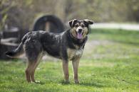 Фото: Ориентальная короткошёрстная : Отдам в хорошие руки симпатичного пса Юнкая