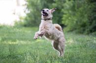 Отдам в хорошие руки великолепную собаку Тайри