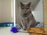 Передержка - Мур-Мяу, гостиница для кошек фото