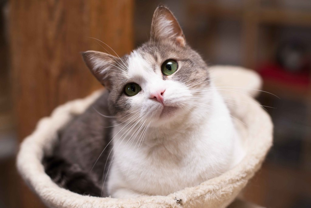 самой кошки фото отдам два озорных